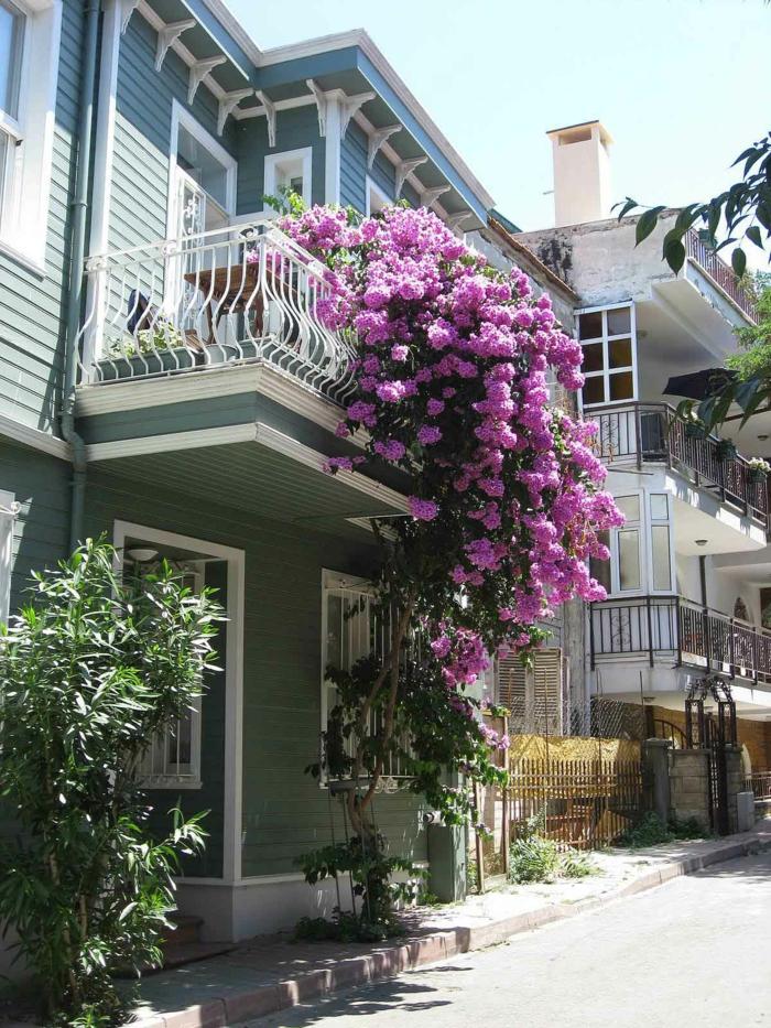 fleurs-de-balcon-violet-pour-bien-decorer-la-terrasse-fleurs-violet-pour-le-balcon-joli