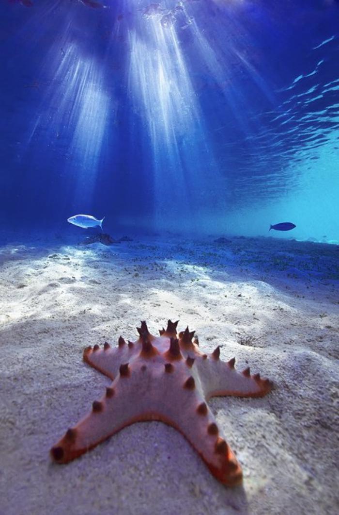 fond-marin-étoile-de-mer-rose-touchée-par-les-rayons-de-soleil
