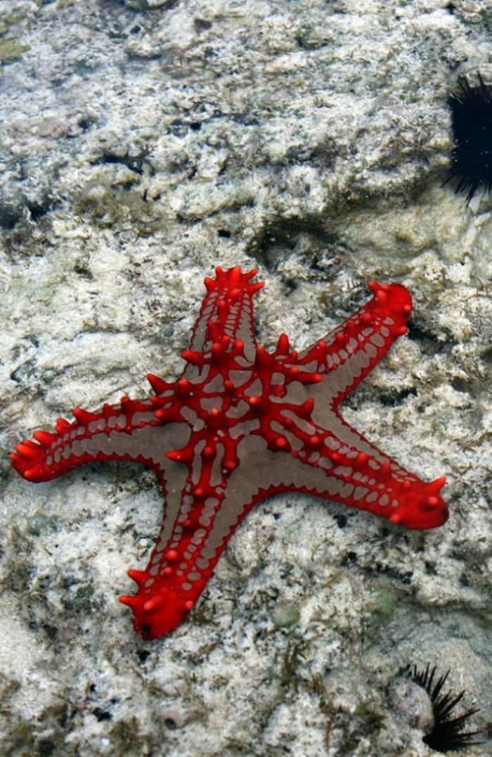 fond-marin-étole-de-mer-rouge-espèces-des-profondeurs-marins