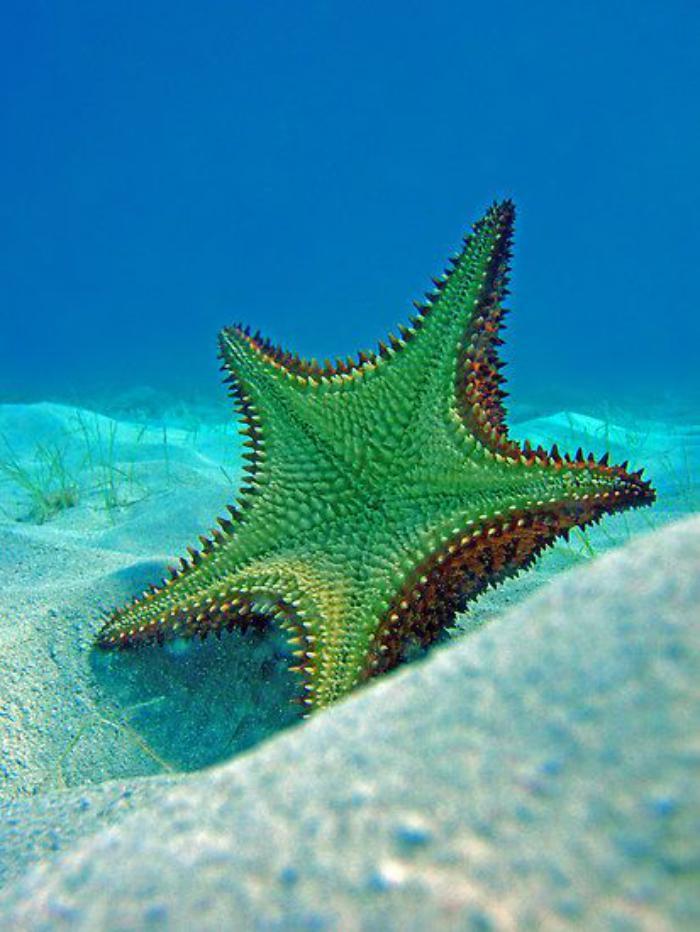 fond-marin-belle-étoile-de-mer-verte