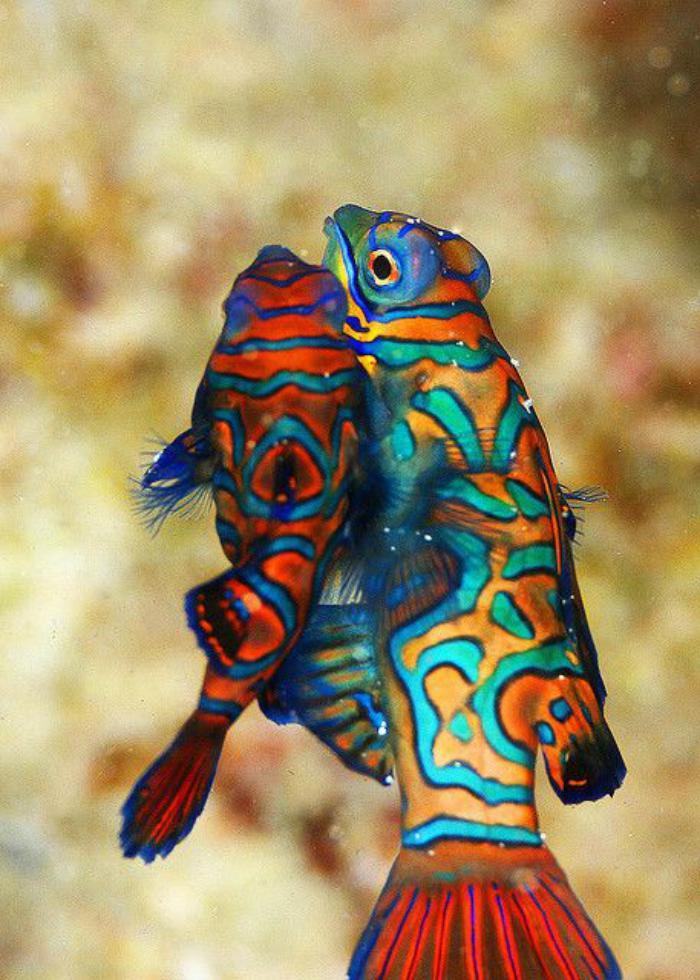 fond-marin-des-poissons-mandarins-jolis