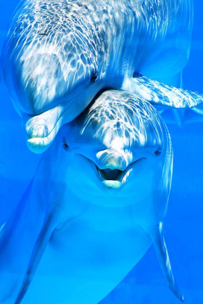 fond-marin-deux-dauphins-qui-jouent