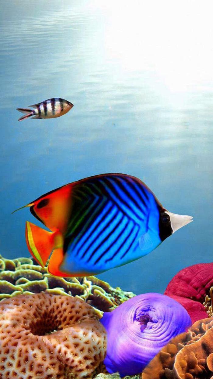 fond-marin-divesrité-biologique-marine