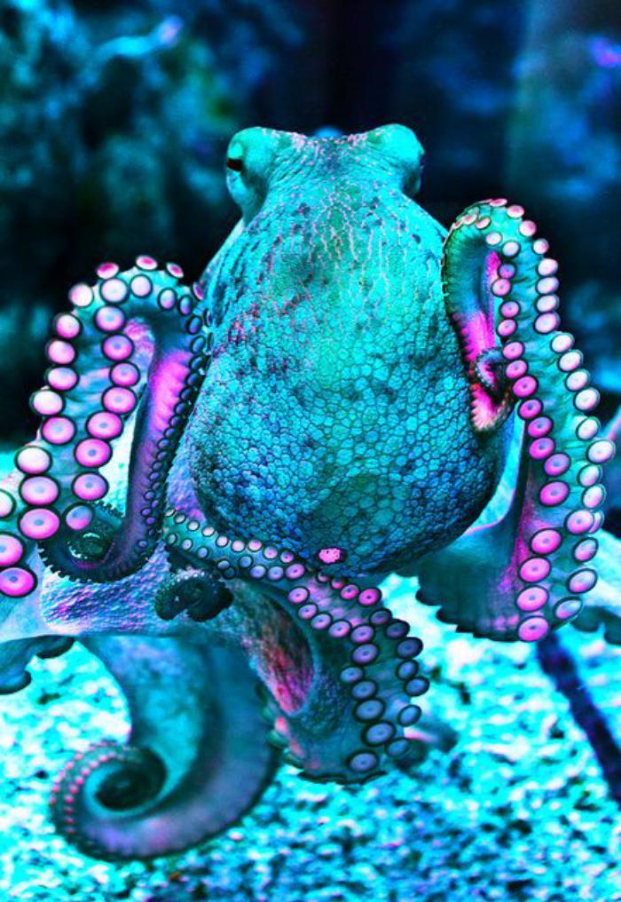 fond-marin-espèces-bizarres-poulpe-vénimeux