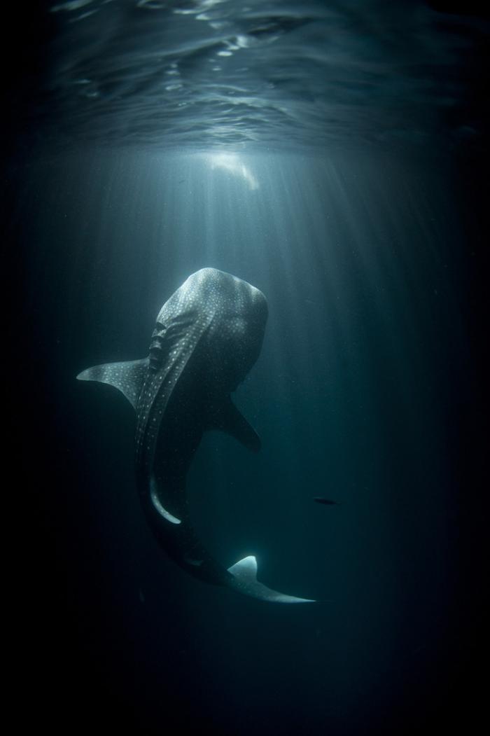 fond-marin-requin-dans-les-abysses-de-mer