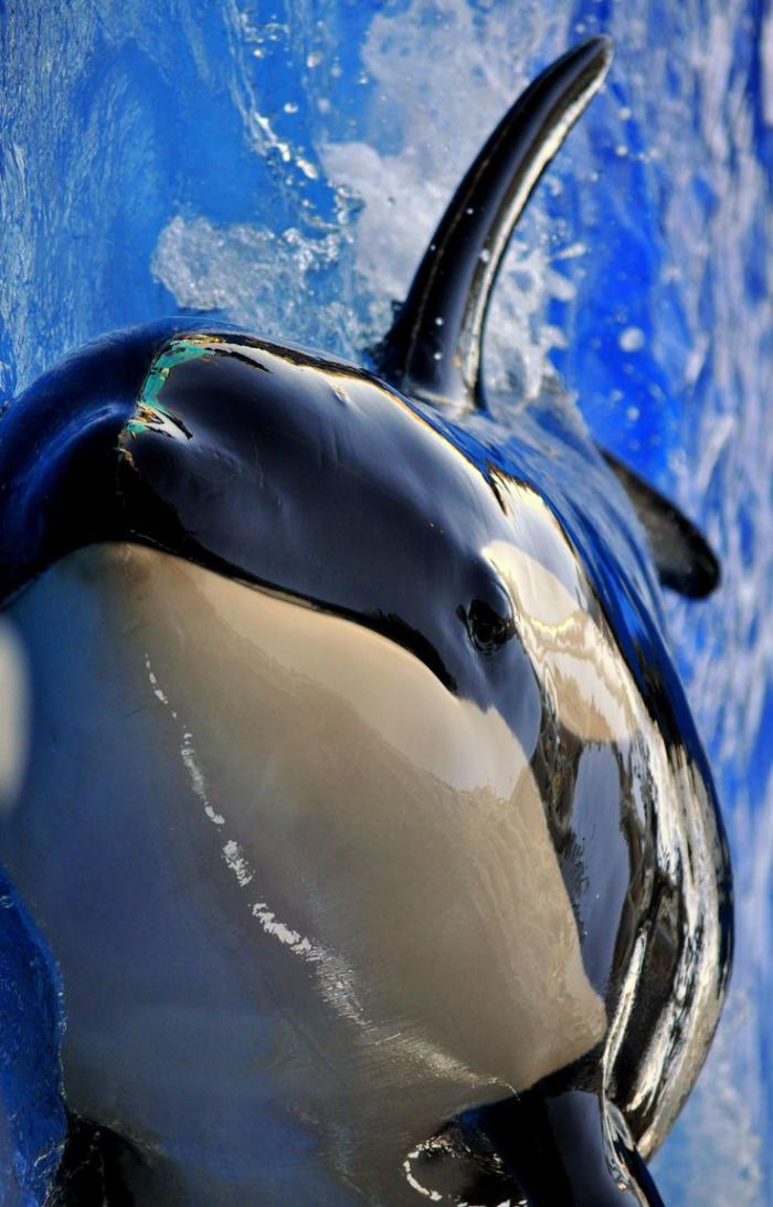 fond-marin-habitants-des-fonds-marins-vie-des-animaux