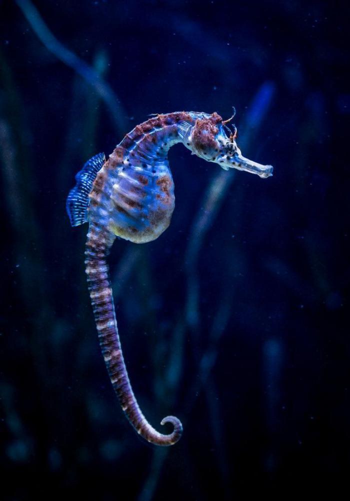 fond-marin-hippocampe-bleue-au-fond-de-la-mer