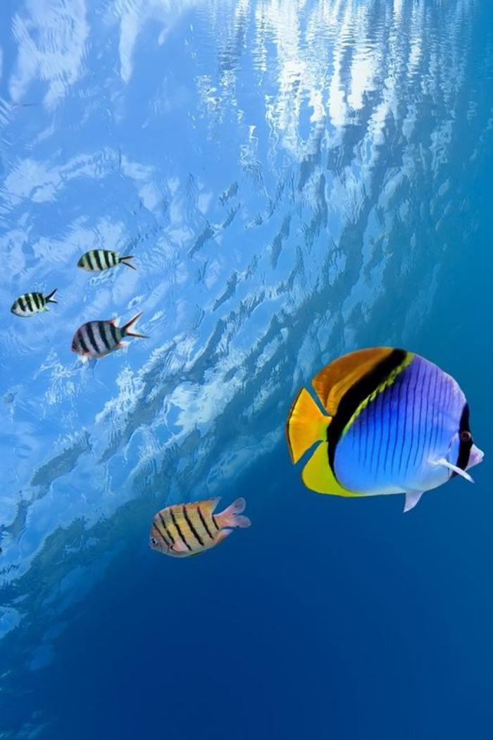 fond-marin-jolis-poissons-tropicaux-dans-les-eaux-limpides