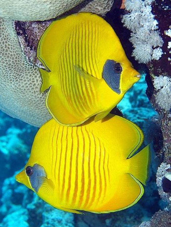 fond-marin-jolis-poissons-tropicaux