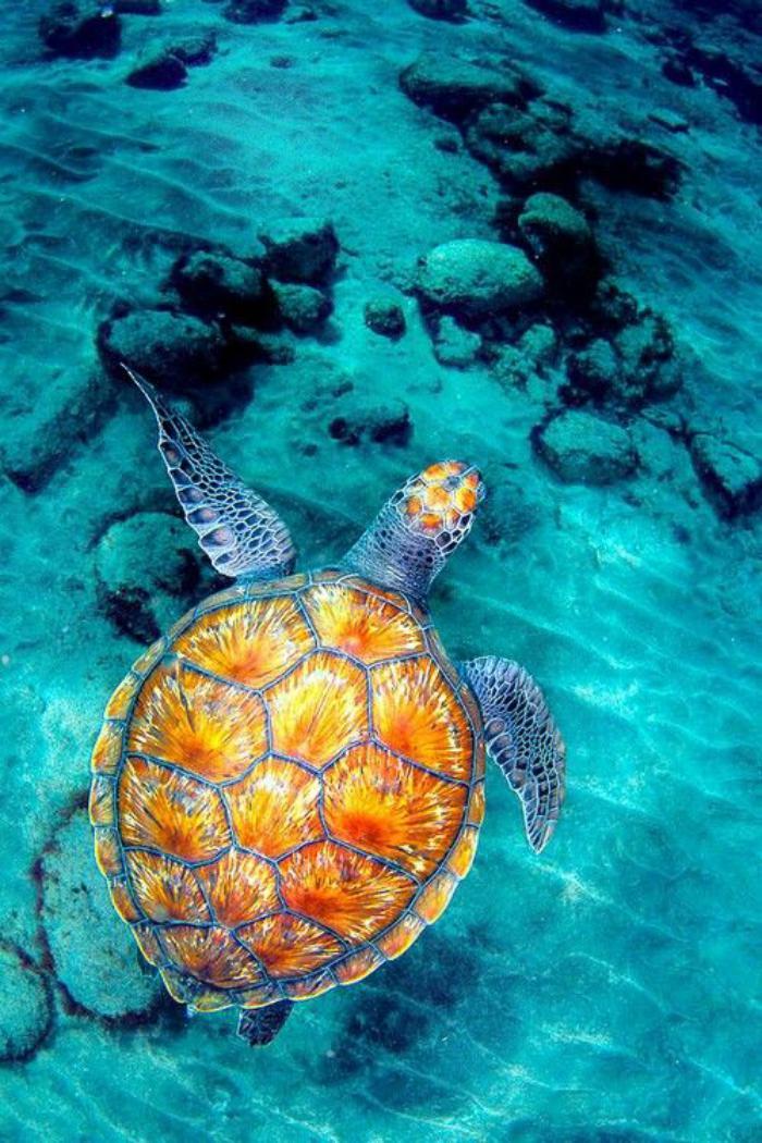 fond-marin-la-vie-des-mers-et-des-océans