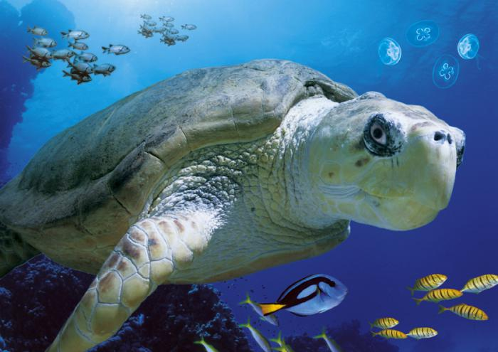 fond-marin-la-vie-des-océans-tortue-géante