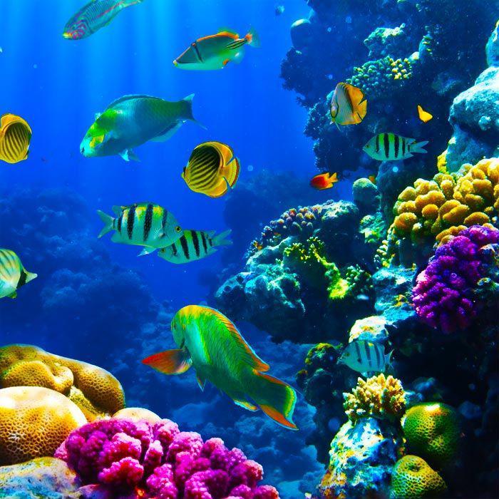 Cr atures uniques qui habitent le fond marin - Grand poisson de mer ...