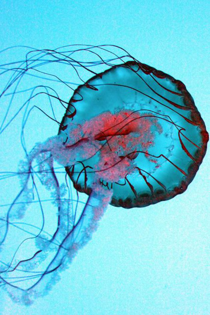 fond-marin-le-monde-marin-méduse-bleue