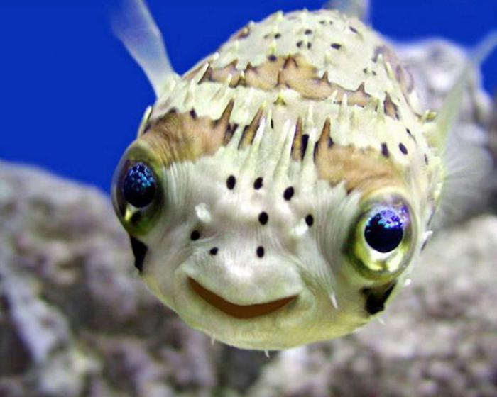fond-marin-le-poisson-qui-sourit-êtres-sou-s-marins-sympas