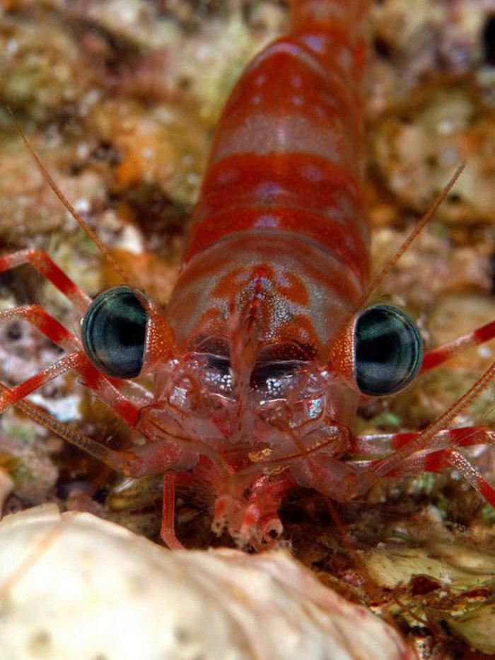 fond-marin-le-regard-unique-de-la-crevette