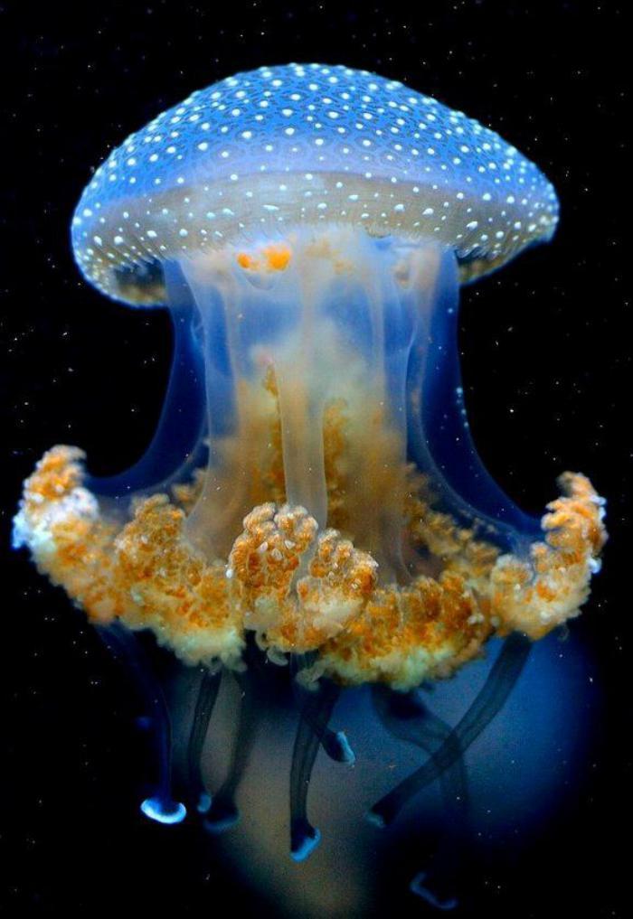 fond-marin-méduse-magnifique-prise-en-photo