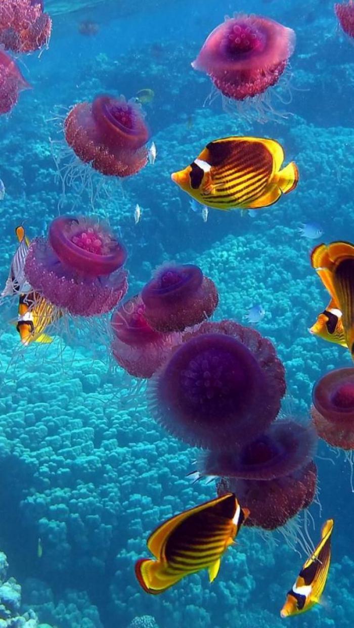 fond-marin-méduses-poissons-et-coraux-bleus