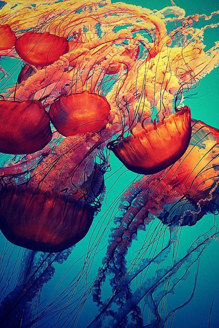 fond-marin-méduses-rouges-splendides-espèces-marines