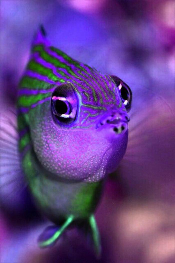 fond-marin-mine-expressive-d'un-poisson-bizarre