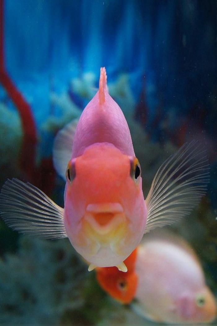 fond-marin-poisson-curieux-rose