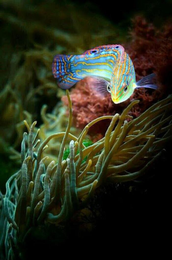fond-marin-poisson-joli-en-couleurs-splendides