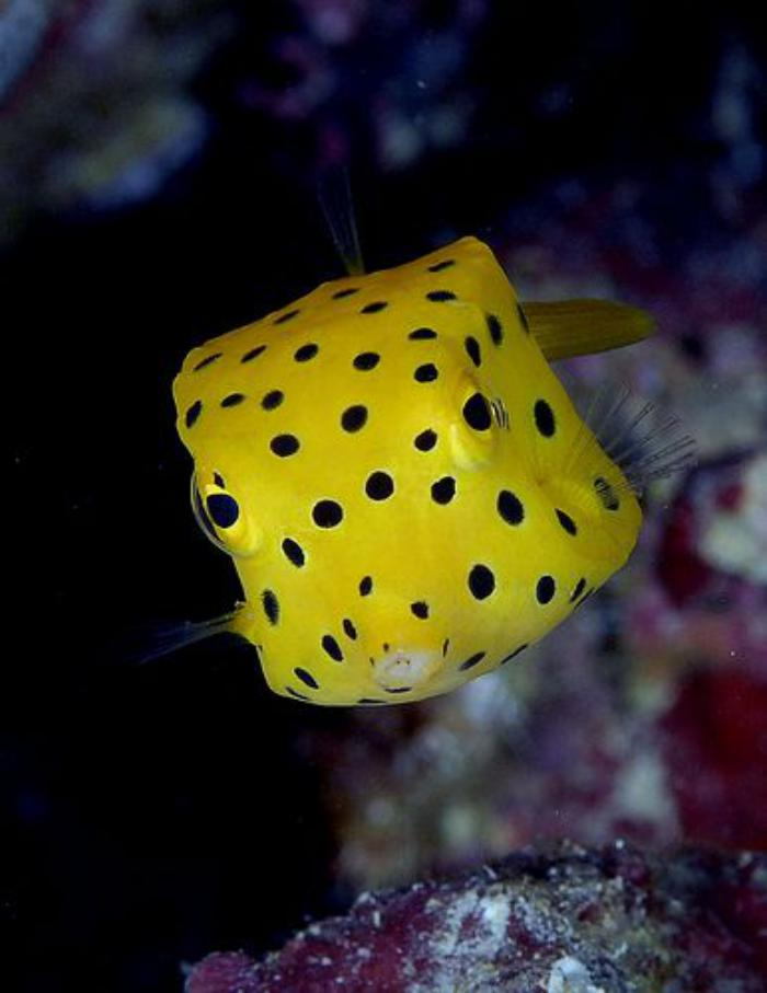fond-marin-poisson-sympathique-jaune-points-noirs