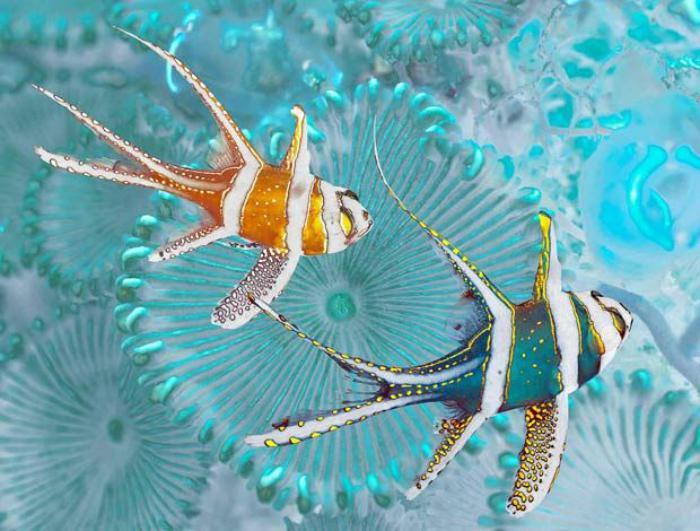 fond-marin-poissons-colorés-au-dessus-des-corails-bleus