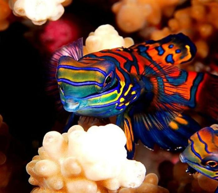 fond-marin-poissons-mandarins-en-couleurs-festives