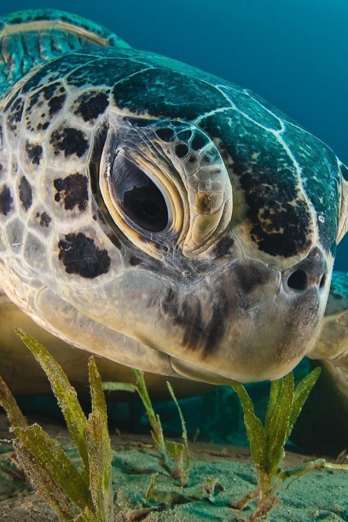 fond-marin-tortue-de-mer-de-proche-photos-du-monde-marin