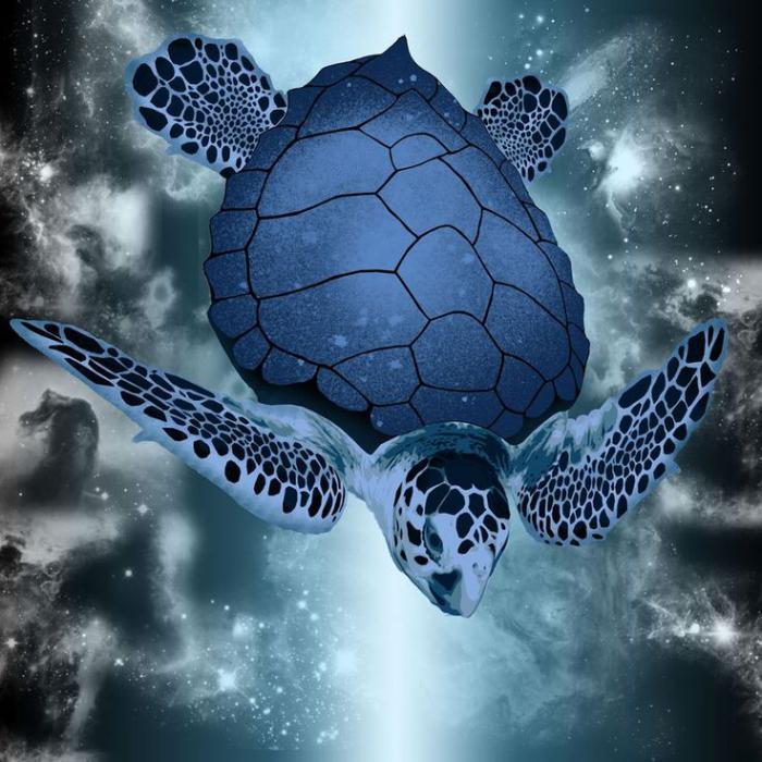 fond-marin-tortue-marine-magnifique-prises-de-photos-sauvages