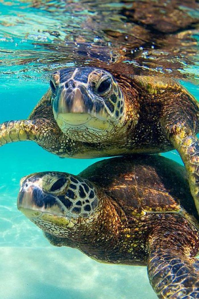 fond-marin-tortues-marins-nageant-en-couple