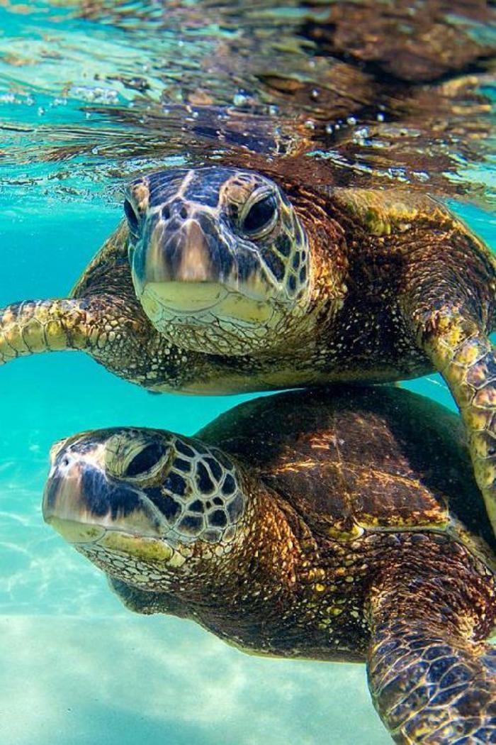 fond-marin-tortues-marins-nageant-en-couple