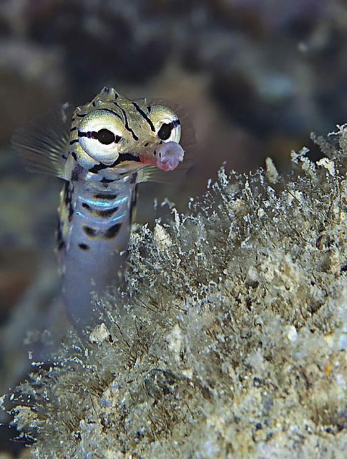 fond-marin-unêtre-sympathique-du-monde-sous-marin