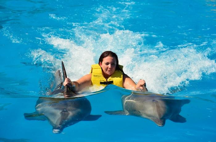 idée-cadeau-coupon-nager-avec-les-dauphins-france-deux-dauphines