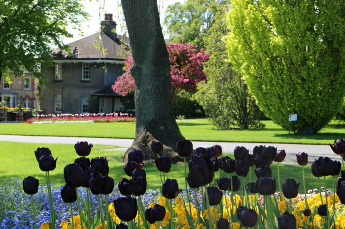 idées-bouquet-tulipe-noire-fleur-de-beauté-réel-arbre-maison-jardin