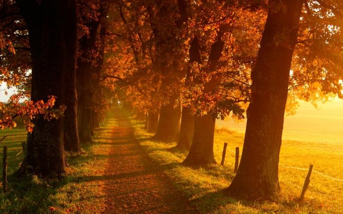 image-d-automne-paysage-landscape-tableau-chouette-sur-ma-route