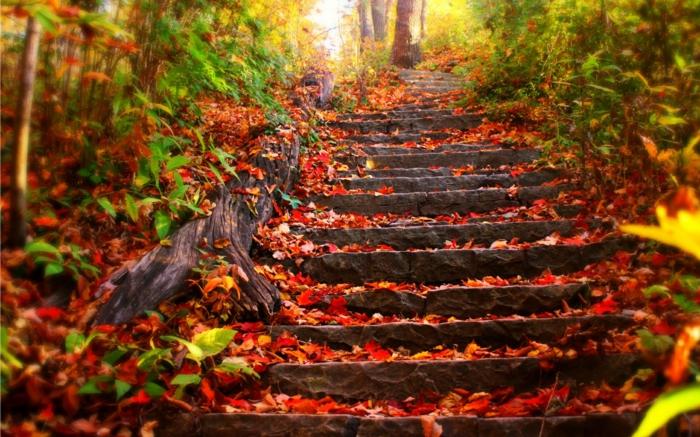 image-d-automne-paysage-landscape-tableau-escaliers-en-automne-pierres