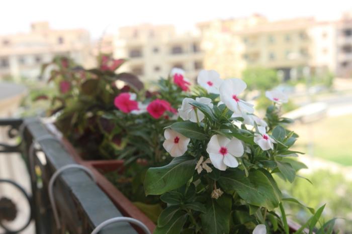 jardiniere-balcon-comment-fleurir-son-balcon-avec-ces-jolis-fleurs-exterieur-modernes