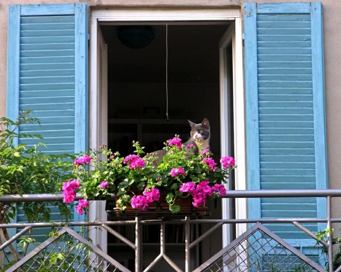 joli-balcon-avec-fleurs-de-balcon-colorés-violet-avec-chat-pour-votre-balcon