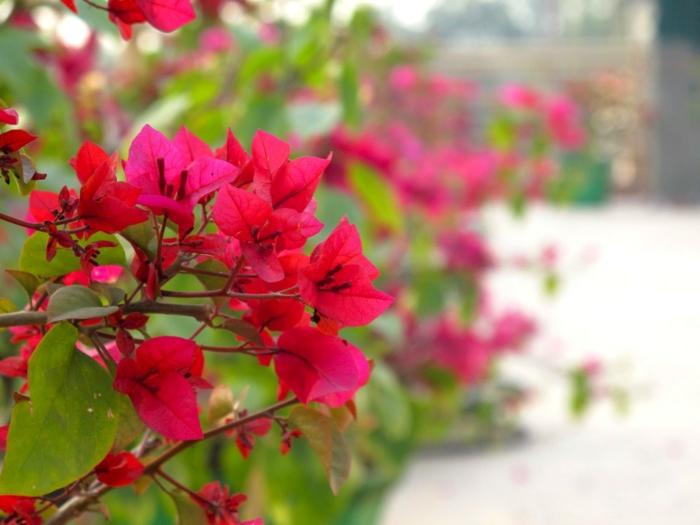joli-fleurs-de-balcon-jardiniere-balcon-avec-jolis-fleurs-d-exterieur-moderne-