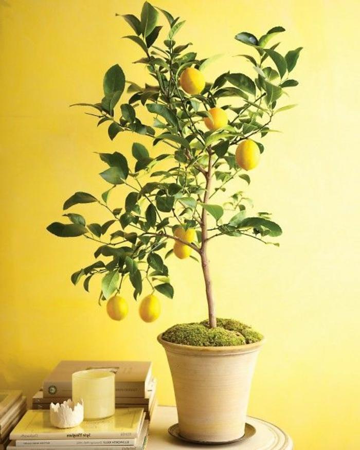 jolie-plante-d-interieur-lime-joli-interieur-avec-murs-jaunes-fleurs-d-interieur