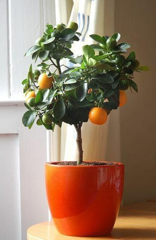 jolie-plante-exotique-intérieur-pour-decorer-bien-l-interieur-chez-vous-les-fleurs-d-interieur
