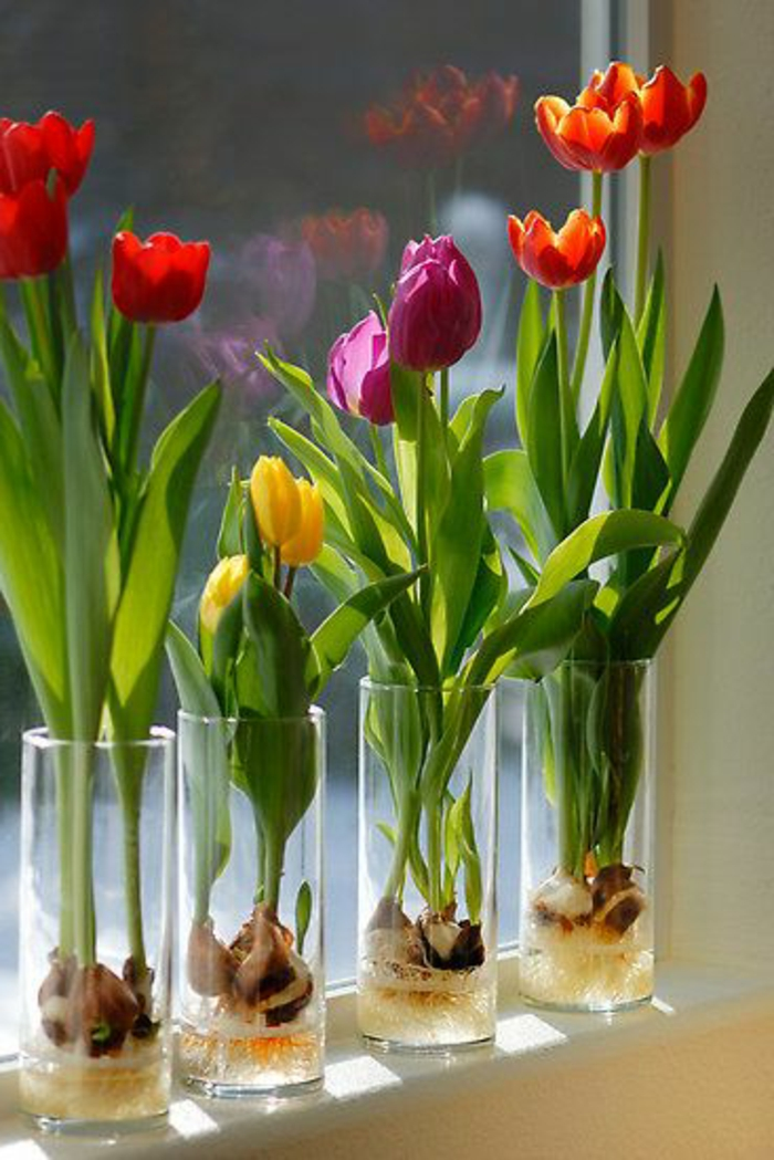 jolies-fleures-plante-exotique-intérieur-jolie-decoration-avec-tulipe-pour-la-fenetre