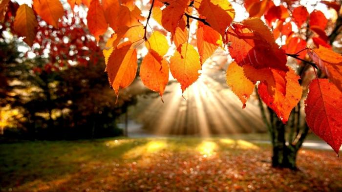 la-beauté-de-la-nature-paysage-automne-saison-vue-soleil