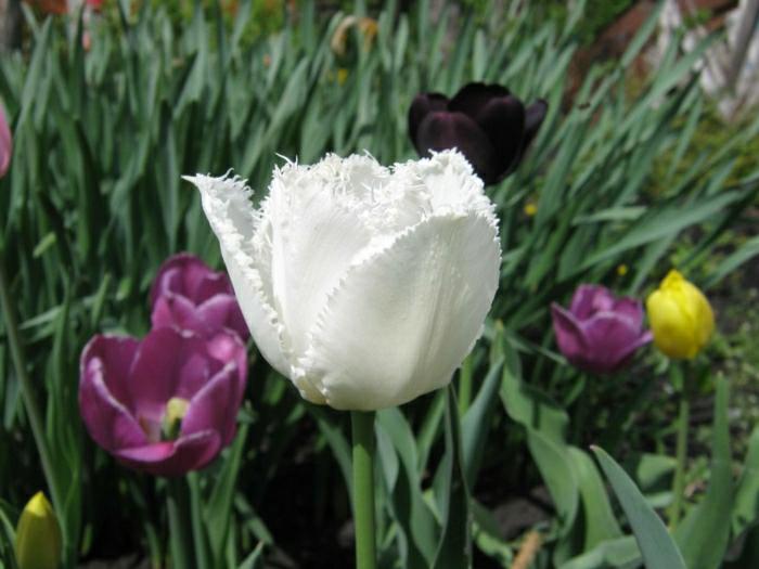 la-tulipe-noire-photographe-publicitaire-idée-à-faire-blanc-et-violet