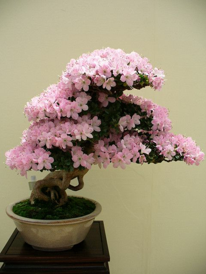 Savourez la beaut de la plante d int rieur dans notre for Plantes japonaises