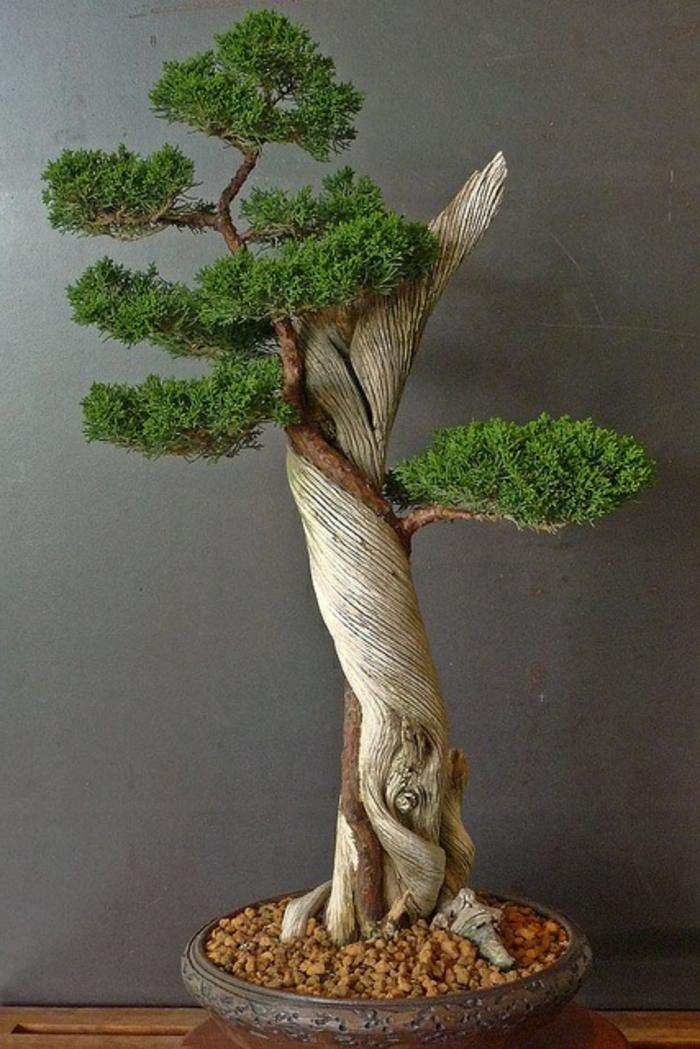 le-style-japonais-dans-l-intérieur-un-joli-bonsai-pour-decorer-chez-vous-avec-plante-exotique-intérieur-bonsai-vert
