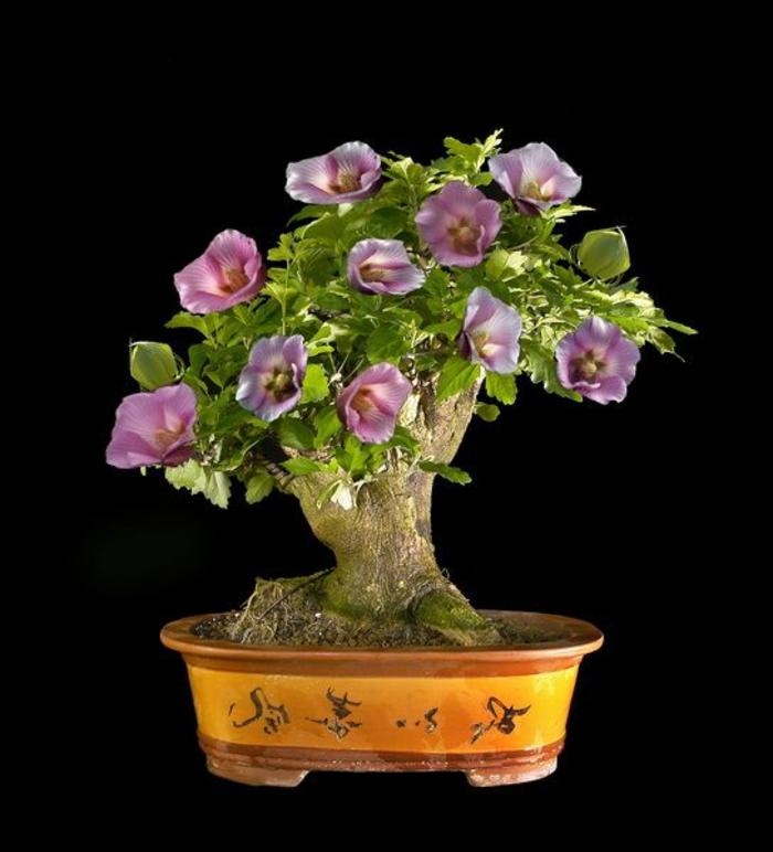 le-style-japonais-dans-l-intérieur-un-joli-bonsai-pour-decorer-chez-vous-avec-plante-exotique-intérieur-hibiscus-bonsain
