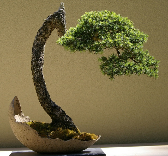 le-style-japonais-dans-l-intérieur-un-joli-bonsai-pour-decorer-chez-vous-avec-plante-exotique-intérieur-joli-bonsai