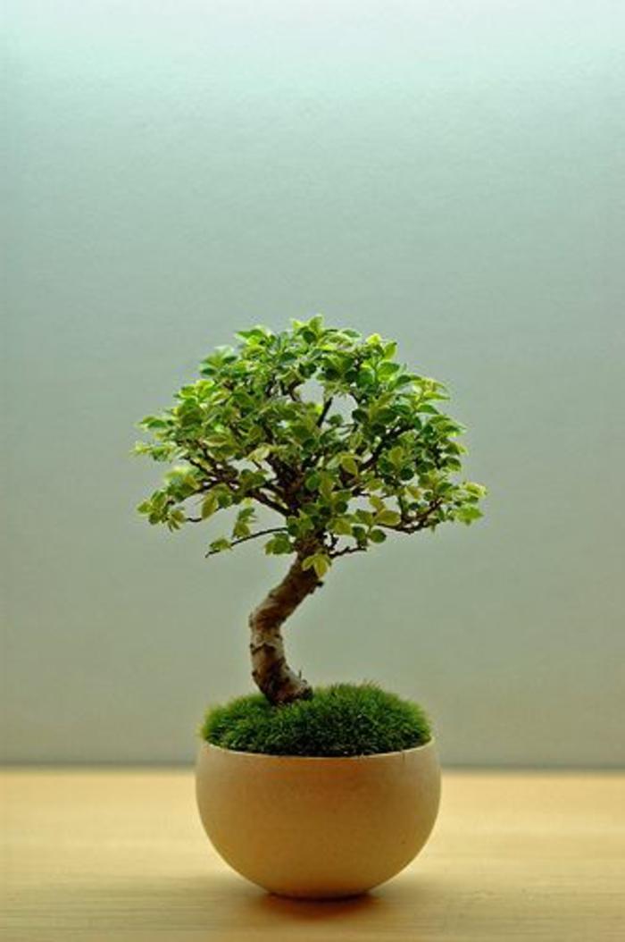Savourez la beaut de la plante d int rieur dans notre for Pflanzen zu hause